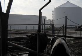Impianto Biogas azienda agricola funzionante con sola deiezione